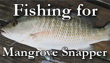 Fishing for Mangrove Snapper