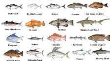 Florida Saltwater Fish Profiles