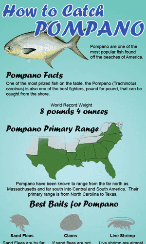 How to Catch Pompano infographic