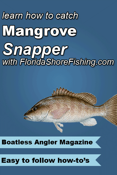 There are not many fish that can be caught inshore that have the reputation for fight and flavor that can match the Mangrove Snapper.  Learn how to catch them here!