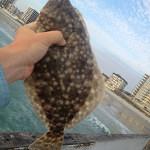 040413-flounder