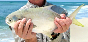 How to catch pompano fishing from florida shores for Pompano fish good to eat