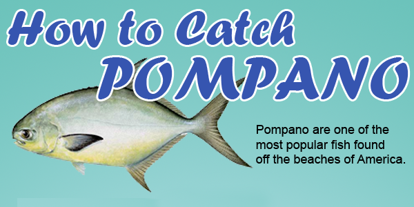 How to catch pompano fishing from florida shores for Florida pompano fish