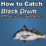Black Drum Fishing
