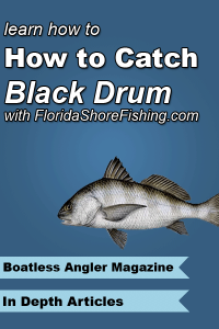 How to Catch Black Drum:  One of the largest fish that can be caught from the shore!  Learn how what gear to use, where to find them and how to catch them!