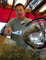 Live or Frozen Shrimp for Bait   Fishing from Florida Shores
